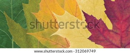 composition of beautiful colored autumn leaves close up - stock photo