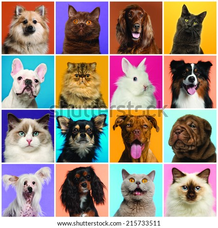 Composition of Dogs and Cats head - stock photo