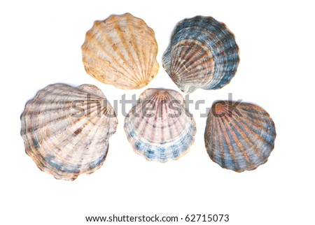 composition of exotic shells isolated on a white background close-ups - stock photo