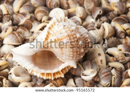 composition of exotic shells isolated on a white background closeups