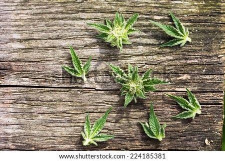 Composition of fresh marijuana plant bud with crystals and leaves on grunge wooden desk. View from above. - stock photo