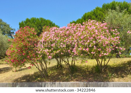 composition of multicolored trees beneath a clear blue sky - stock photo