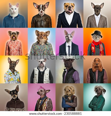 Composition of pets dressed - stock photo