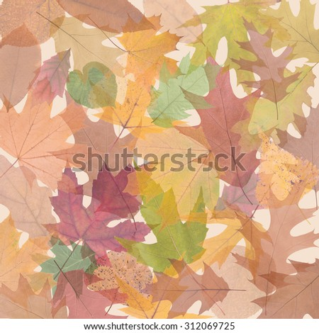 composition of translucent colored autumn leaves close up  - stock photo