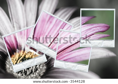 Composition with a group of instant photos photos restoring the color on a black and white background - stock photo