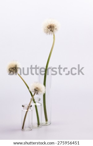 Composition with dandelion seeds and small glass bottles with grey background