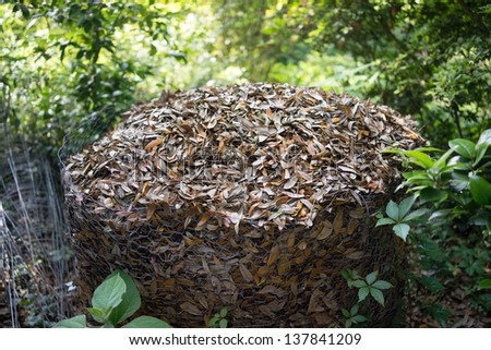 Compost heap consisting of live oak leaves in a chicken wire enclosure outdoors. Recycling at work! - stock photo