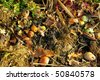 compost pile - stock photo