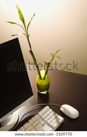Computer on desk with lucky bamboo in vase. - stock photo