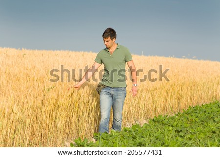 Conceived young farmer touching ripe golden wheat in field - stock photo