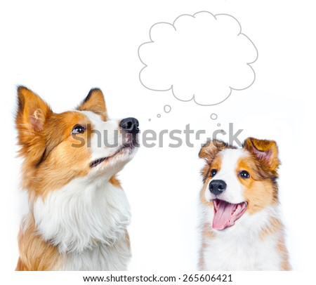 Concept: Adult border collie and border collie puppy are dreaming - stock photo