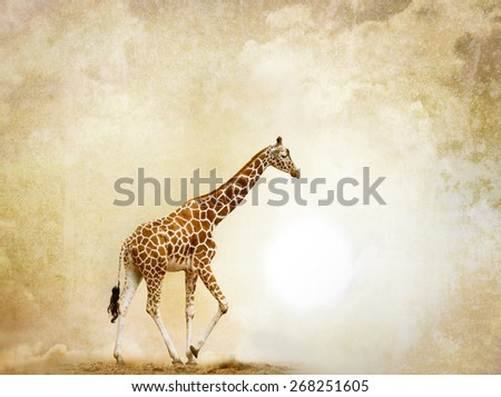 Concept: Alone giraffe in desert, with grunge background behind it - stock photo