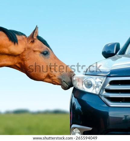 Concept: arabian stallion and vehicle - stallion and steel horse - stock photo