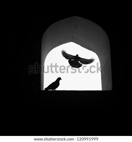 Concept background, dove of hope flying through window. - stock photo
