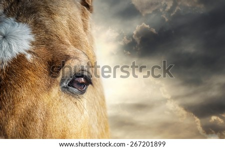 Concept: closeup of horse head with eye in the center of composition and skies behind it - stock photo