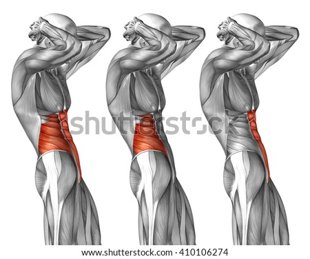 Concept 3 D Chest Human Anatomy Anatomical Stock Illustration ...