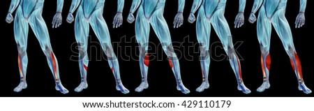 Concept 3D human lower leg anatomy or anatomical and muscle set collection isolated on black background metaphor to body, tendon, fit, foot, strong, biological, gym, fitness, skinless, health medical