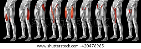 Concept 3D human upper leg anatomy or anatomical and muscle set collection isolated on black background  metaphor to body, tendon, fit, foot, strong, biological, gym, fitness, skinless, health medical
