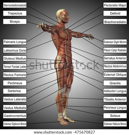 Concept 3d Illustration Male Human Anatomy Stock Illustration
