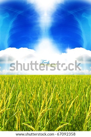concept fresh - lung on the clouds with rice field - stock photo