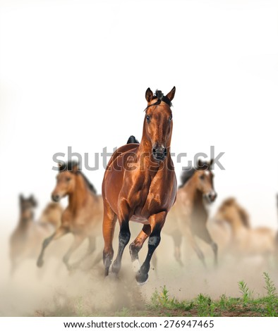 Concept: herd of wild beautiful purebred horses running fast in the dust