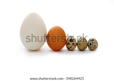 concept of a family with three kids. different-sized eggs (goose, chicken, quail) standing in a row. They symbolize a couple of parents and their three children. Isolated on white background - stock photo