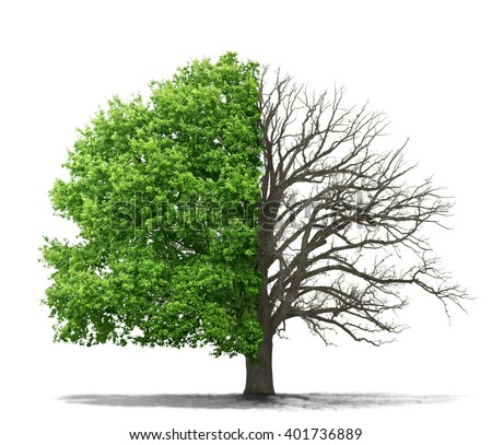 Concept of doubleness. Dead tree on one side and living tree on the different side. Isolated on a white background. - stock photo