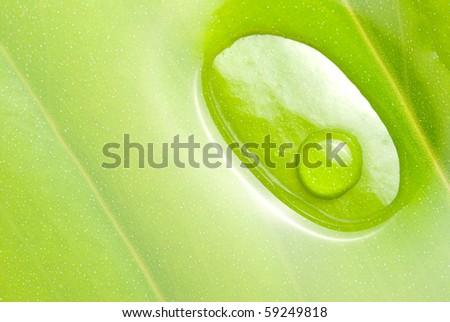 concept of freshness, circle fresh dews on green leaf - stock photo