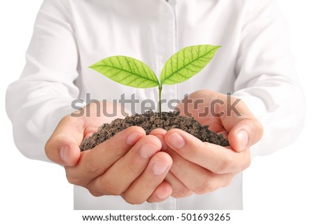 Concept of growing from plant in a hand