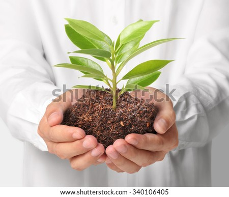 Concept of growing from plant  in hand - stock photo
