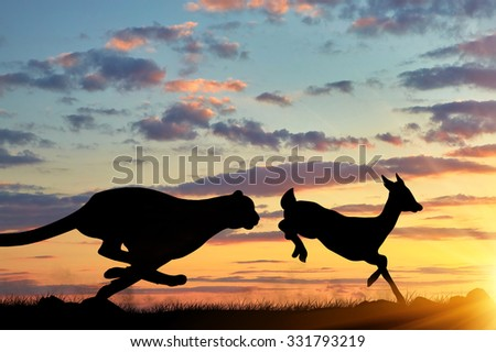 Concept of hunting. Silhouette of a cheetah running after a gazelle at sunset - stock photo