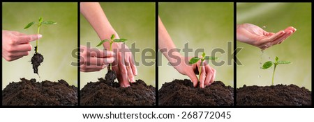Concept of seeding and plant growing in collection - stock photo