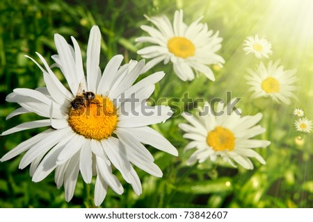 concept of sunny spring with flowers and bee - stock photo