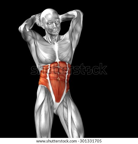 Concept or conceptual 3D chest human anatomy or anatomical and muscle isolated on black background metaphor to body, tendon, spine, fit, abs, strong, biological, gym, fitness, skinless, health medical - stock photo