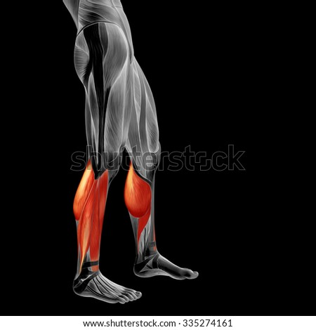 Concept or conceptual 3D human lower leg anatomy or anatomical and muscle isolated on black background metaphor to body, tendon, fit, foot, strong, biological, gym, fitness, skinless, health medical - stock photo