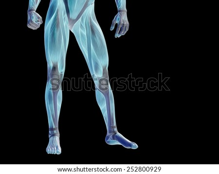 Concept or conceptual human or man 3D anatomy body with muscle over black background, metaphor to medicine, sport, male, muscular, medical, health, medicine, biology, anatomical, strong fitness design - stock photo