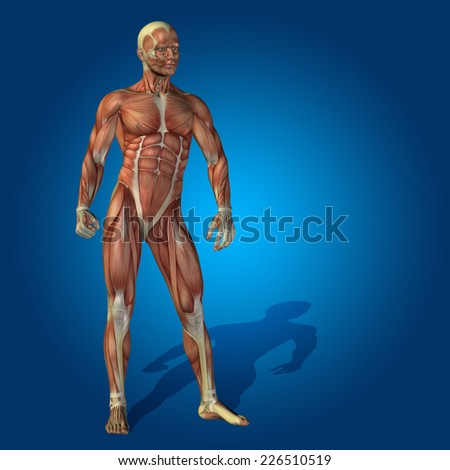 Concept or conceptual human or man 3D anatomy body with muscle over blue background, metaphor to medicine, sport, male, muscular, medical, health, medicine, biology, anatomical, strong fitness designd - stock photo