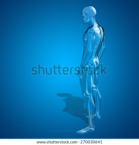 Concept or conceptual human or man 3D anatomy body with muscle over blue background, metaphor to medicine, sport, male, muscular, medical, health, medicine, biology, anatomical, strong fitness design - stock photo