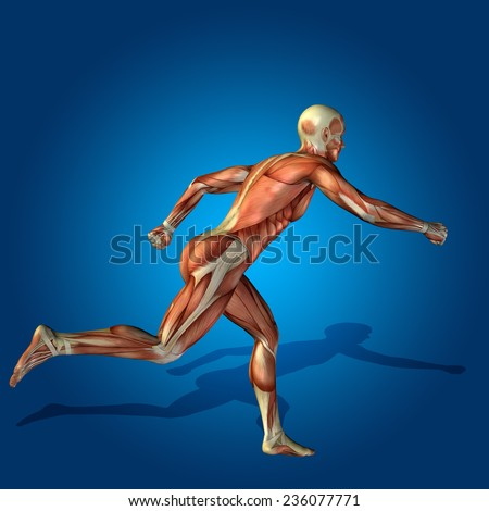 Concept or conceptual strong human or man 3D anatomy body with muscle for health or sport over blue background - stock photo