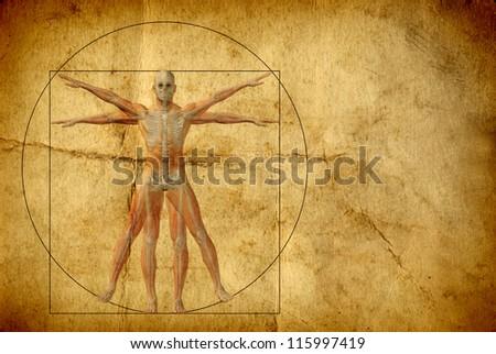 da vinci anatomy book pdf