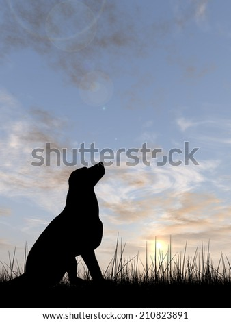 Concept or conceptual young beautiful black cute dog silhouette in grass or meadow over a sky at sunset landscape background, metaphor to nature, summer, fun, happy, domestic, vacation, peace or relax