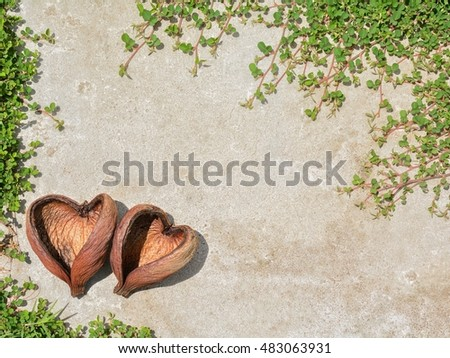 Concept romantic lover in nature. The blend between nature and buildings. Seed dry and Green grass with white cement floor.