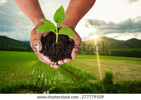 concept save the world ,hand man  holding tree on green field at mountain and sunshine background - stock photo