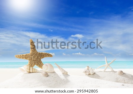 Concept Summer. Starfish and Shell on Sandy Beach - stock photo