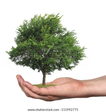 concept symbolizing the care of the forest or sell wood - stock photo