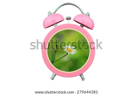 conceptual art : time to relax : white cosmos flower within pink alarm clock isolated on white background - stock photo