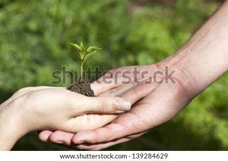 Conceptual closeup environment photo of two hands holding a young plant