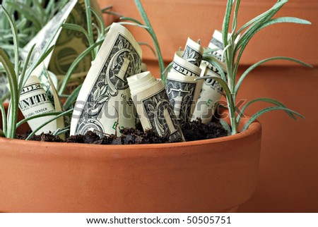 Conceptual financial image of growing money.  Macro with shallow dof.