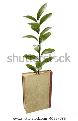 Conceptual image illustrating the growth of knowledge with a plant growing out of an old book. - stock photo