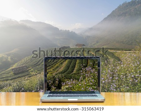 Conceptual image of a computer laptop on Tea field when sunrise with fog, Doi angkhang, Chiangmai province, Thailand - stock photo